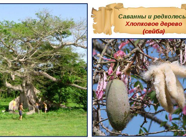 Саванны и редколесья Хлопковое дерево (сейба)