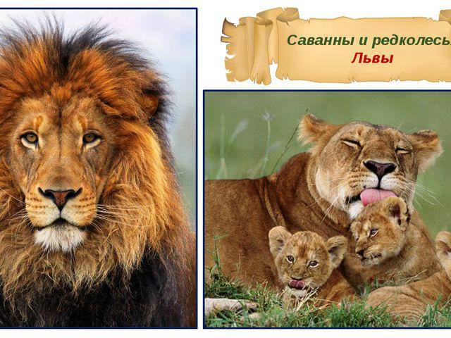 Саванны и редколесья Львы