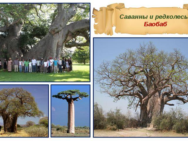 Саванны и редколесья Баобаб