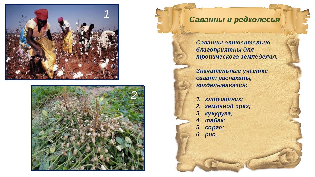Саванны относительно благоприятны для тропического земледелия. Значительные у...