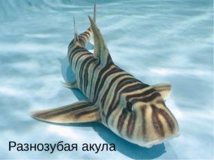 Разнозубая акула