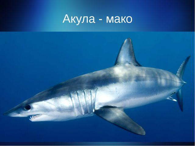 Акула - мако