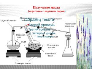 Получение масла (перегонка с водяным паром)