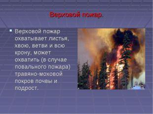 Верховой пожар. Верховой пожар охватывает листья, хвою, ветви и всю крону, мо
