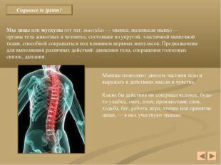 Cognosce te ipsum! Мы́шцы или мускулы (от лат.musculus — мышка, маленькая м