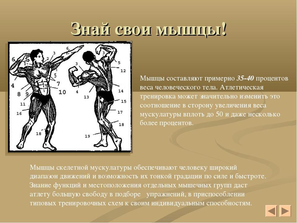 Знай свои мышцы! Мышцы составляют примерно 35-40 процентов веса человеческого...
