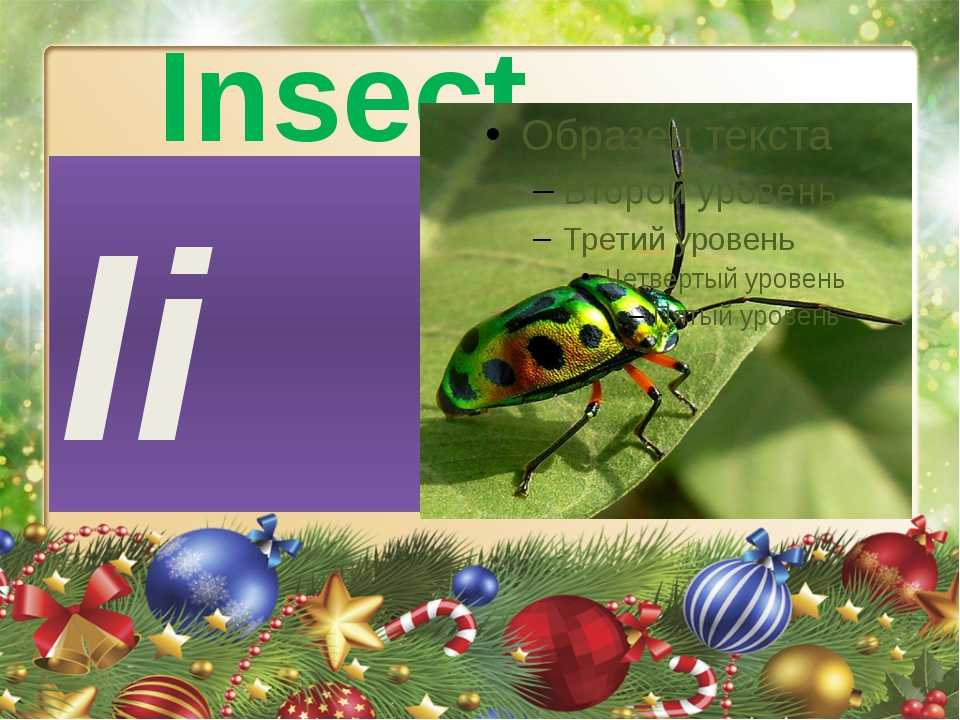 Insect Ii