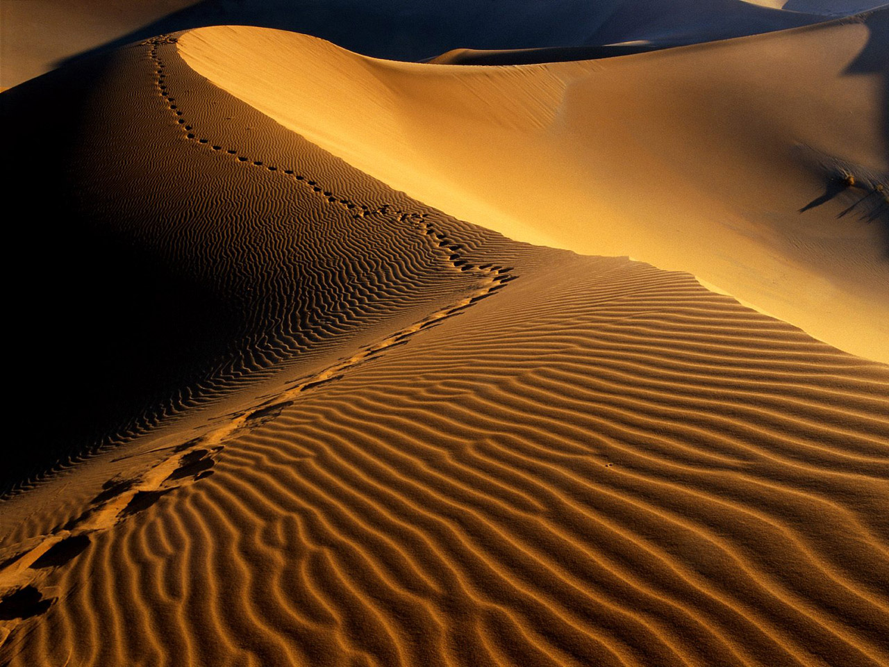 C:\Documents and Settings\Admin\Мои документы\Мои рисунки\desert_2.jpg