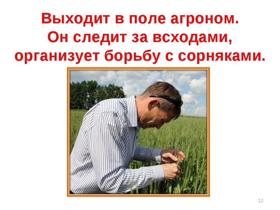 Выходит в поле агроном. Он следит за всходами, организует борьбу с сорняками. *