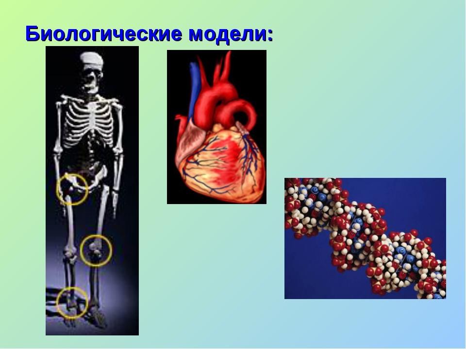 Биологические модели: