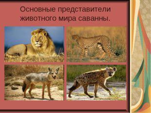 Основные представители животного мира саванны.