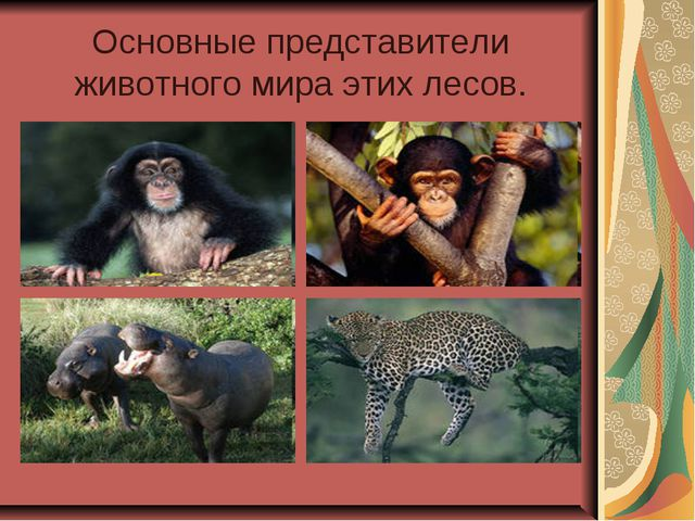 Основные представители животного мира этих лесов.