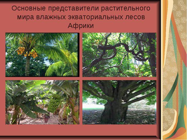 Основные представители растительного мира влажных экваториальных лесов Африки