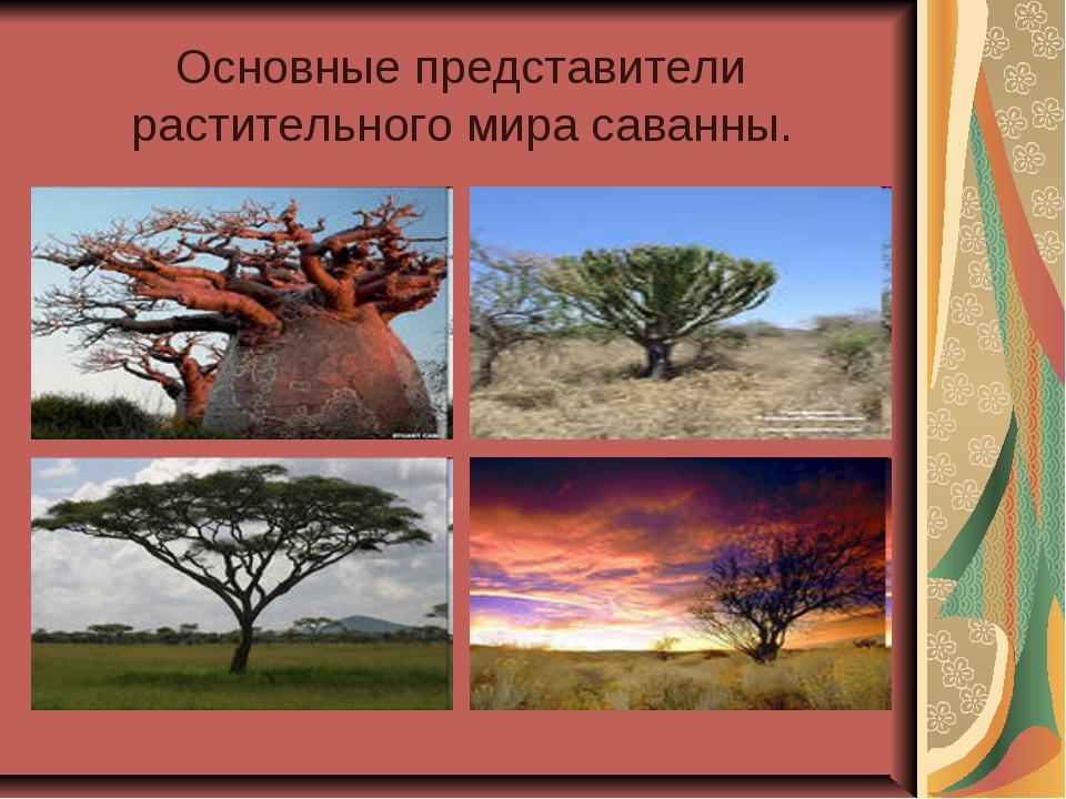 Основные представители растительного мира саванны.
