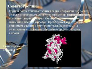Соматотропин Гормон роста.Усиливает синтез белка и тормозит его распад, а так