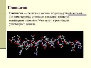 Глюкагон Глюкагон— белковый гормон поджелудочной железы. По химическому стро