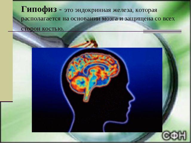 Гипофиз - это эндокринная железа, которая располагается на основании мозга и...