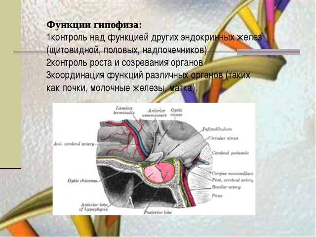 Функции гипофиза: 1контроль над функцией других эндокринных желез (щитовидной...