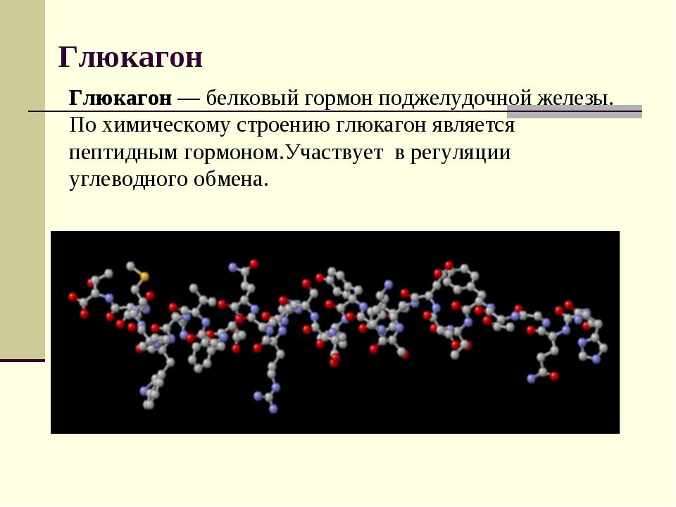 Глюкагон Глюкагон— белковый гормон поджелудочной железы. По химическому стро...