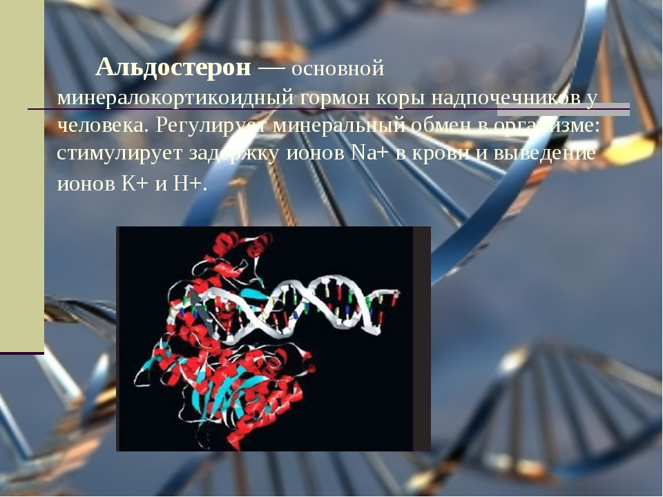 Альдостерон — основной минералокортикоидный гормон коры надпочечников у чело...