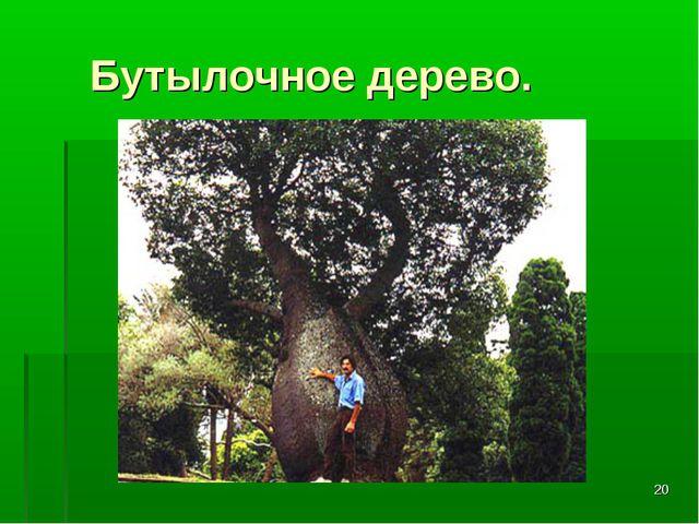 * Бутылочное дерево.