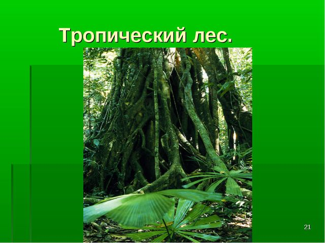 * Тропический лес.
