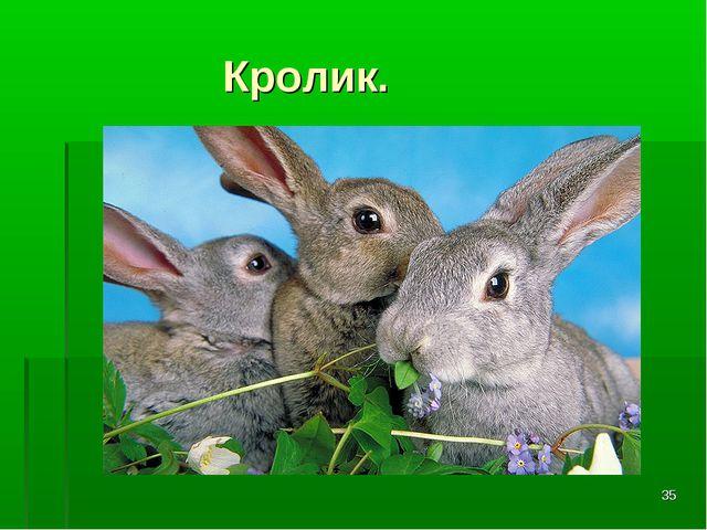 * Кролик.