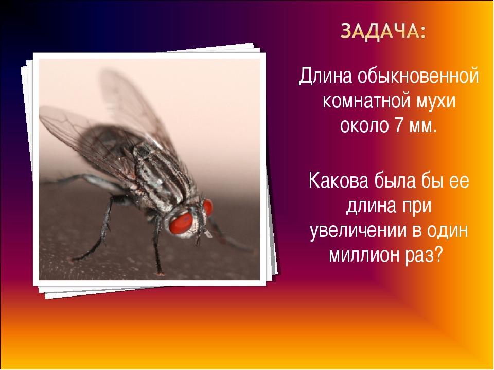 Длина обыкновенной комнатной мухи около 7 мм. Какова была бы ее длина при уве...