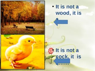 It is not a wood, it is a…. It is not a cock, it is a……