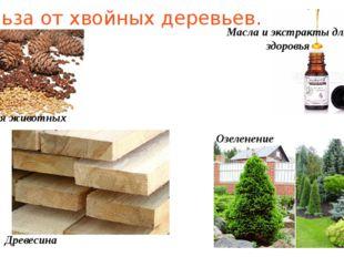 Польза от хвойных деревьев. Пища для животных Древесина Масла и экстракты для