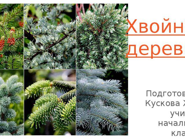 Хвойные деревья Подготовила: Кускова Ж.В., учитель начальных классов