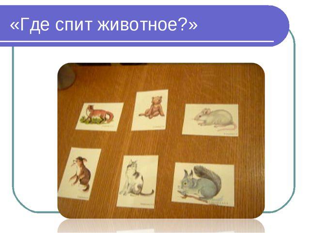 «Где спит животное?»