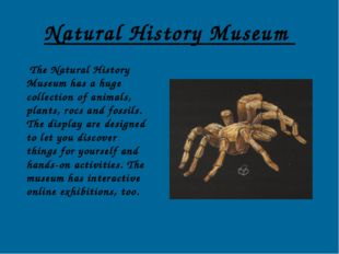 Natural History Museum The Natural History Museum has a huge collection of an