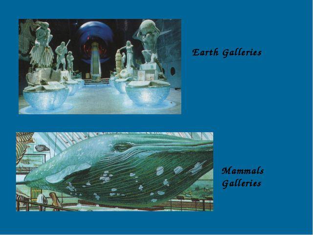 Earth Galleries Mammals Galleries