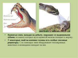 Ядовитые змеи, нападая на добычу, поражают ее выдвижными зубами, по каналу ко