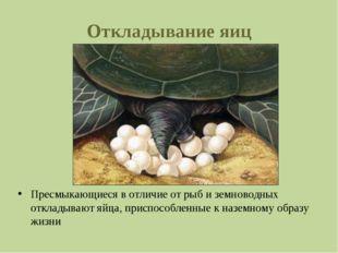 Откладывание яиц Пресмыкающиеся в отличие от рыб и земноводных откладывают яй