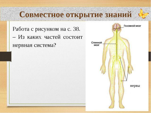 Совместное открытие знаний Работа с рисунком на с. 38. – Из каких частей сос...