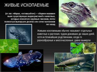Живыми ископаемыми обычно называют отдельных животных и растения, чудом дожив
