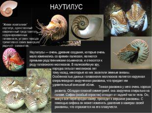 Наутилусы — очень древние создания, которые очень мало изменились со времен п
