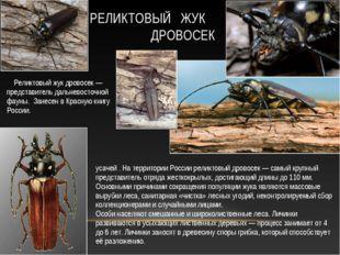 Рели́ктовый дровосе́к, или рели́ктовый уса́ч — вид жуков из семейства усачей