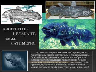 КИСТЕПЕРЫЕ : ЦЕЛАКАНТ, ОН ЖЕ ЛАТИМЕРИЯ Особое место среди костных рыб принадл