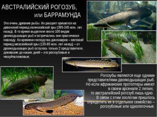 Рогозубы являются еще одними представителями двоякодышащих рыб. Но если африк