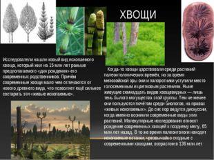Когда-то хвощи царствовали среди растений палеонтологических времён, но за в