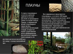 Все современные представители плауновидных, а их около 1000 видов, многолетн