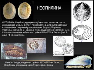 НЕОПИЛИНЫ (Neopilina), род морских глубоководных моллюсков класса моноплакофо
