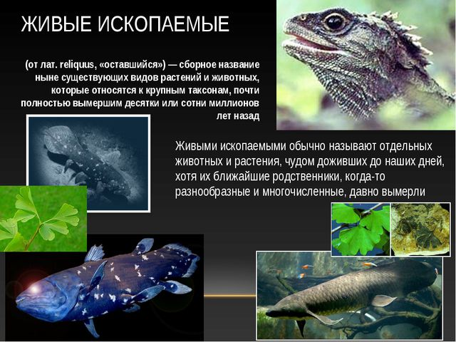 Живыми ископаемыми обычно называют отдельных животных и растения, чудом дожив...