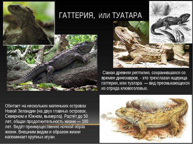 Самая древняя рептилия, сохранившаяся со времен динозавров, - это трехглазая...