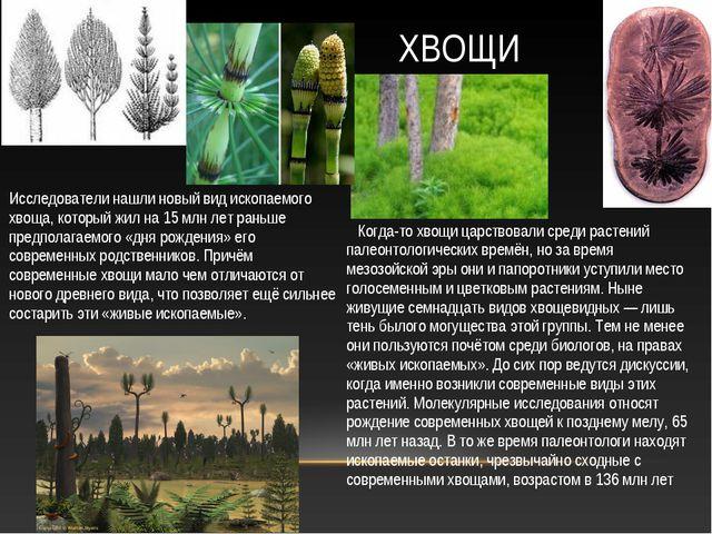 Когда-то хвощи царствовали среди растений палеонтологических времён, но за в...