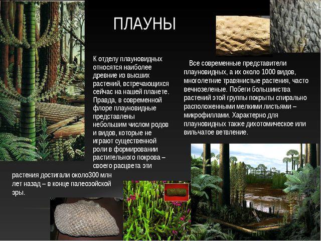 Все современные представители плауновидных, а их около 1000 видов, многолетн...