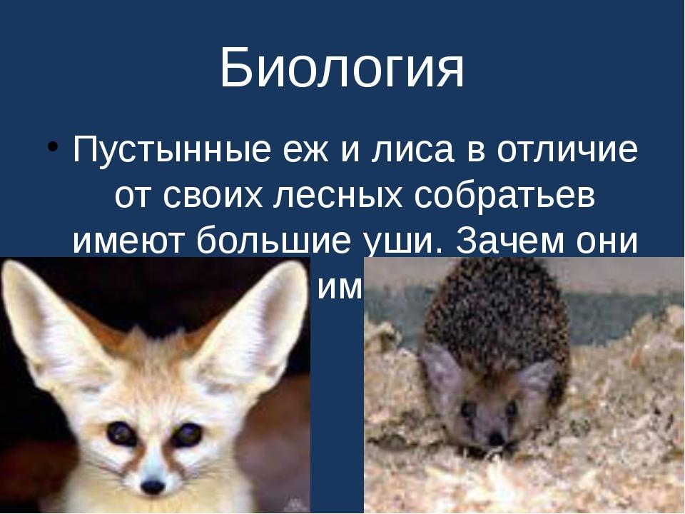 Биология Пустынные еж и лиса в отличие от своих лесных собратьев имеют больши...